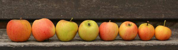 Detox mit Apfelessig
