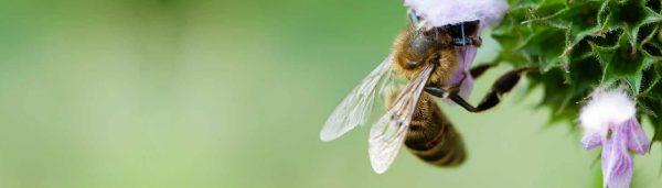 """Initiative """"Bienen und Bauern retten"""""""