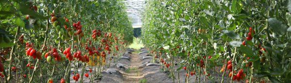 Führungen durch unsere Gärtnerei
