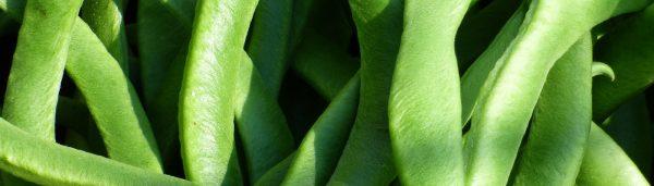 Pikanter Stangenbohnensalat