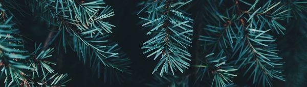 Bio-Weihnachtsbäume