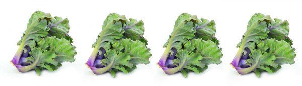 Lauwarmer Flower Sprout-Salat mit Speck