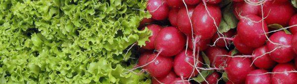 Bunter Frühlings Salat