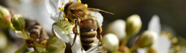 Natur im Glas: Bio-Honig